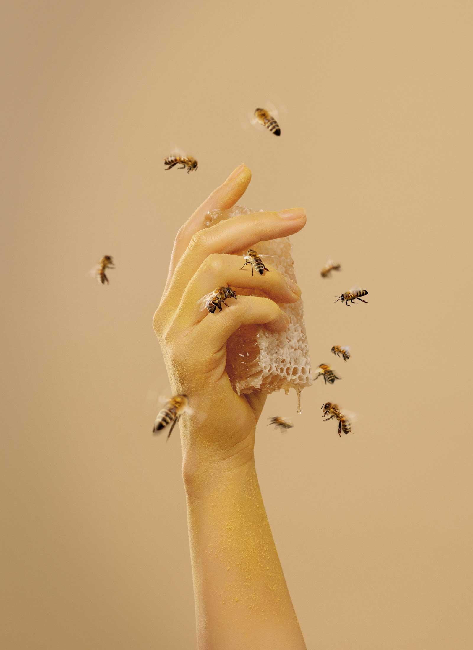 abejas-mano-estudio-como
