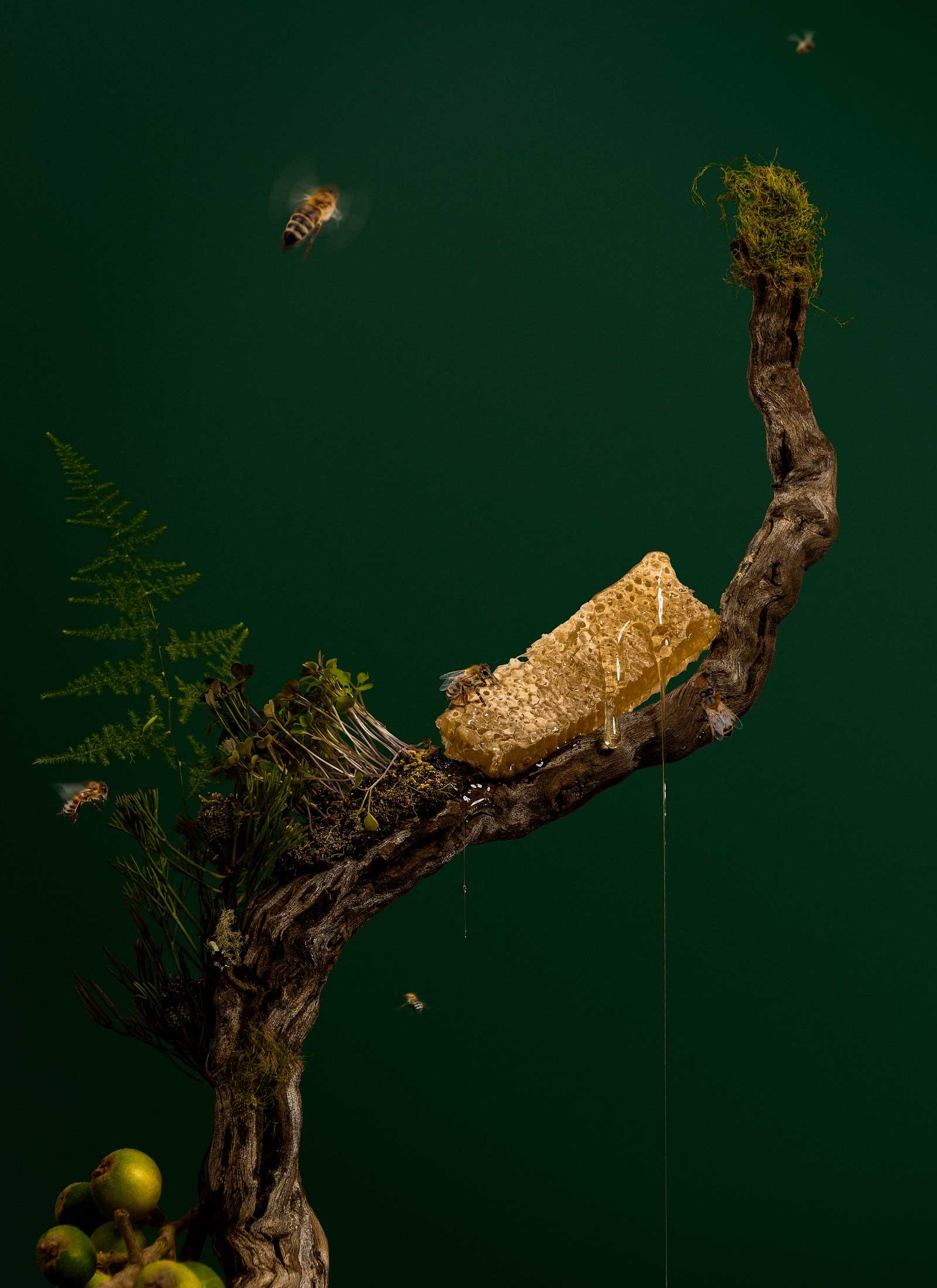 abejas-microgreens-estudio-como