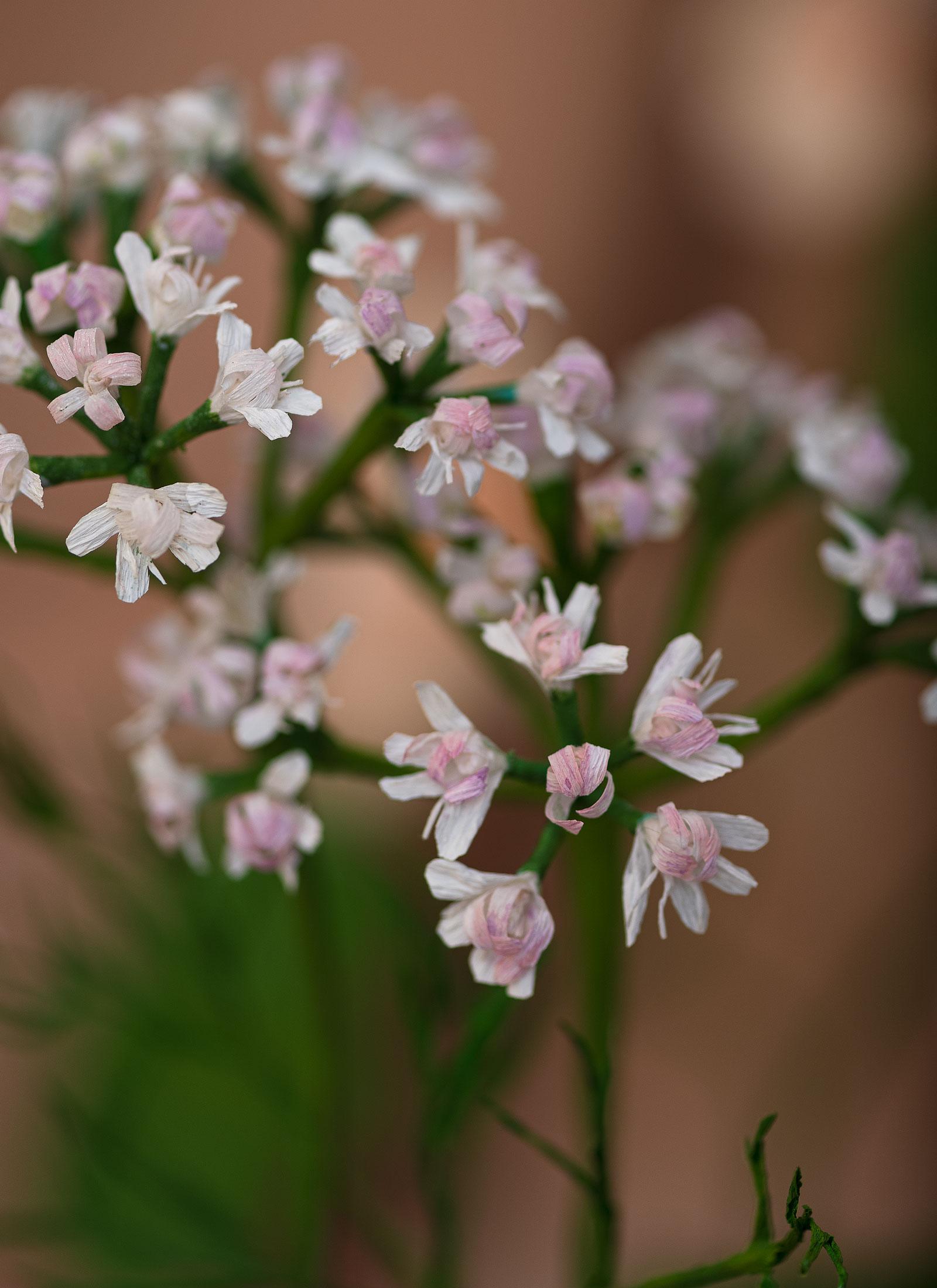flor-cilantro-estudio-como
