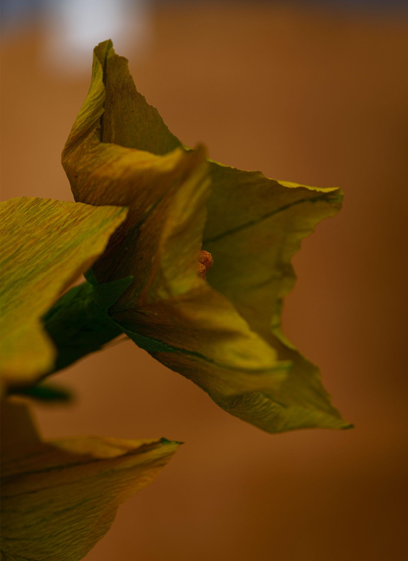 flor-zapallo-perfil-estudio-como